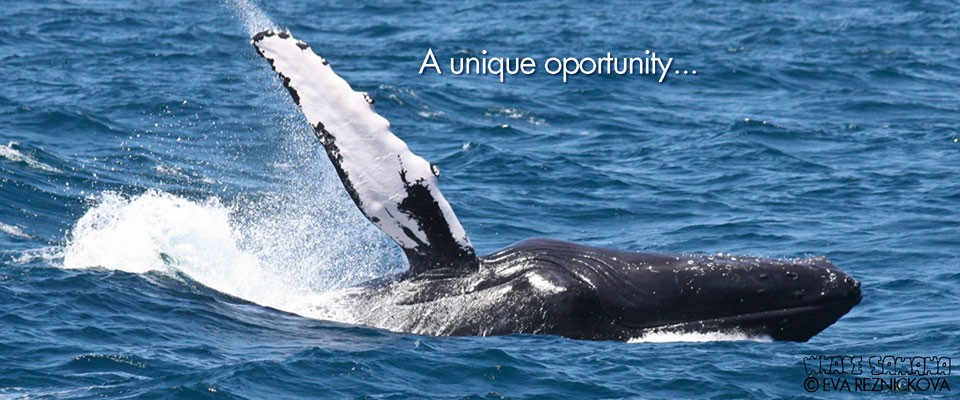 Samana Dominican Republic Whale Watching Tours